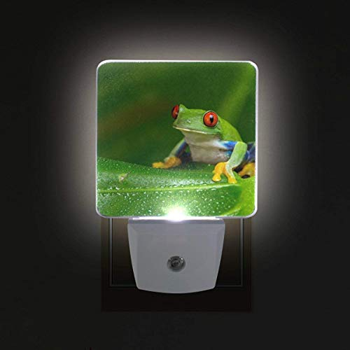 - xiaodengyeluwd 2 Pack Red-Eyed Amazon Tree Frog Plug in LED Night Light Auto Sensor Smart Dusk to Dawn Decorative Night for Bedroom, Bathroom, Kitchen, Stairs,Baby's Room, Energy Saving
