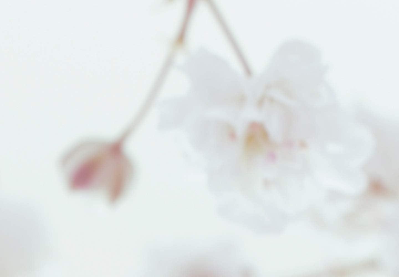 murando Paravento /& Lavagna di Sughero Fiori 135x172 cm Stampa bilaterale su Tela in TNT 100/% Non Trasparente Parete Divisoria Interno Separatore Stanza Wei/ß Spa b-B-0321-z-b