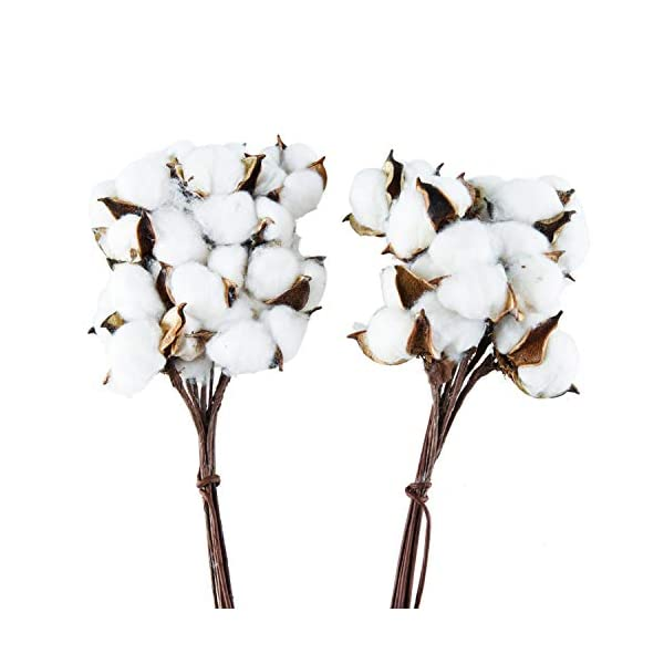 Pomeat 20Pack Natural Cotton Stems Dried Cotton Floral Branch for Farmhouse Fall Decor Wedding Decoration