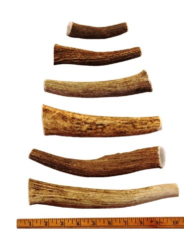 100-All-Natural-Grade-A-Whole-Antler-Elk-Chews-Premium-Dog-Treat-Chew-From-the-USA-Small-Medium-Large-or-Jumbo-by-Downtown-Pet-Supply