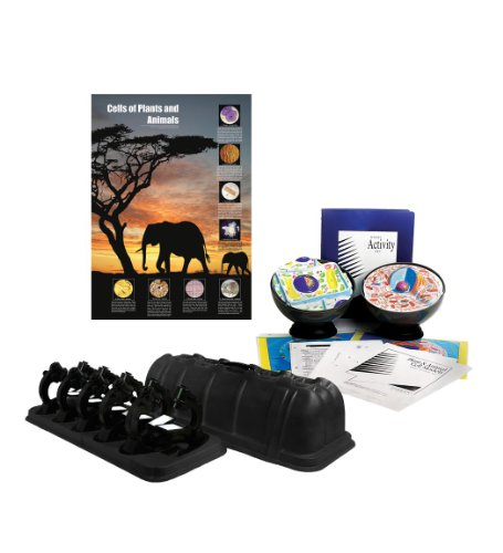 American Educational Products Plants and Animals Cells Cl...
