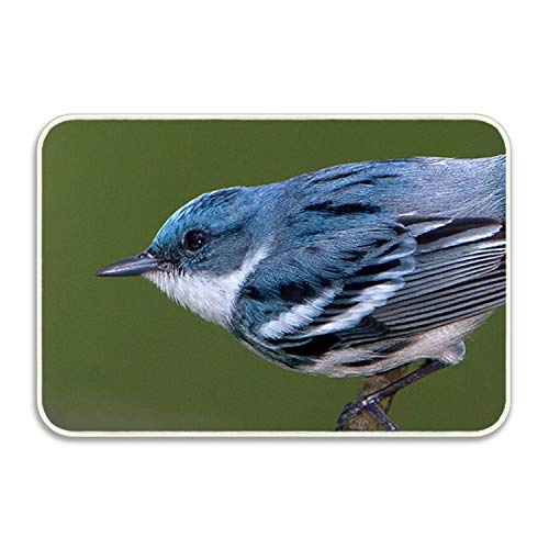 (Niaocpwy Doormat Songbirds of North Carolina Chart Entrance Floor Mat Rug Indoor/Outdoor/Front Door/Bathroom Mats Rubber Non Slip)