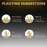 LED Grow Light Bloom Plus BP-1000 Grow Lights for