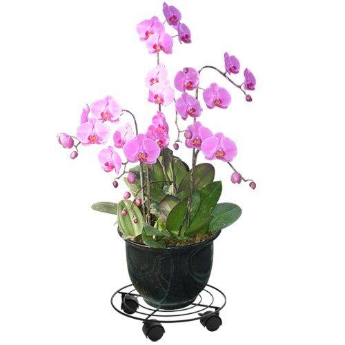 Matte black paint metal garden style flower shelf flower rack turntable (31 31 6cm) by Flower Rack
