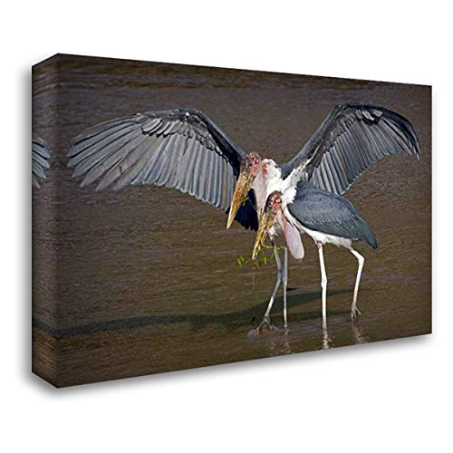 Kenya Pair of Marabou Storks in Shallow Water 40x28 Gallery Wrapped Stretched Canvas Art by Williams, Joanne ()