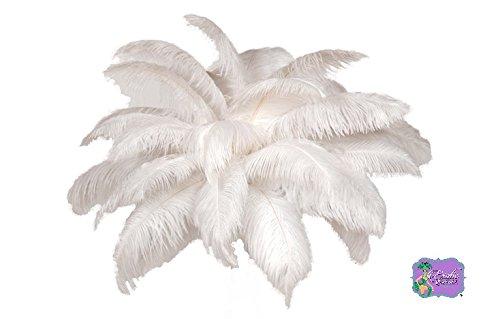 Special Sale OSTRICH Feathers Wholesale Bulk 14/18