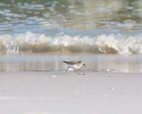 Sandpiper Photograph - Bird on the Beach -
