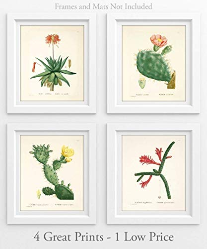 Cacti - Set of 4-11x14 Unframed Art Prints - Makes a Great Home Decor Under $25