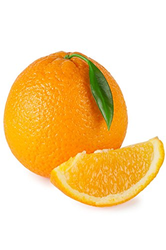 Hamlin Orange Tree, Nearly Seedless Citrus (Excludes: CA,TX,LA,AZ)