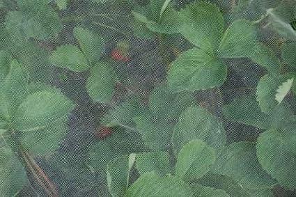 Many Agralan Enviromesh Fine Insect Garden Allotment Vegetable Netting Mesh 1.8m wide per metre