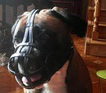 B1, Black Light leather Dog Muzzle for Boxer and Other dogs with short snout