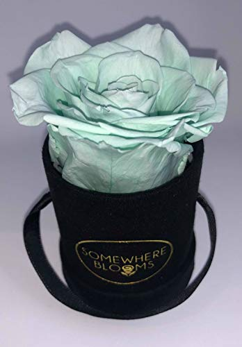 Somewhere Blooms Eternity Rose, Suede Gift Box, Preserved Fresh Flower, Long Lasting, Perfect Luxury Gift for Mother's Day, Birthday, Anniversary (Tiffany Blue, Black Box)