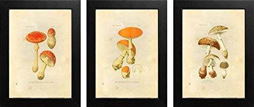Ink Inc. Mushroom Botanical Prints Vintage Wall Art Drawing, Set of 3, 8x10, Unframed ()