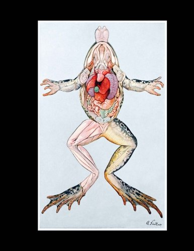 Anatomy of a Female Common Frog Notebook: 8-1/2 x 11 College Rule Lined 110 Pages in (Common Frog)