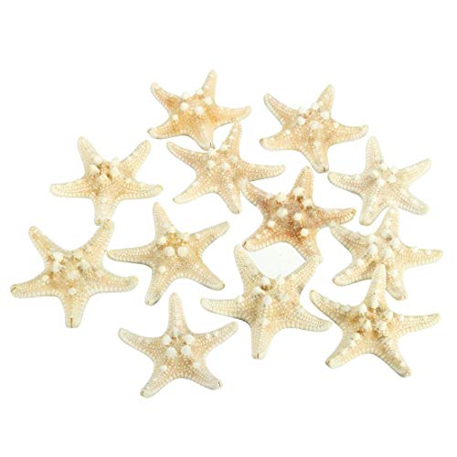 Decorative Decorative - 12 X White Knobby Starfish 5cm 7cm Sea Star Shell Beach Wedding Display Craft Decor - Resin Seashell Ship Large Seahorse Stunt Starfish Marin Wooden Craft