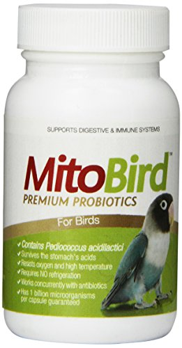 MitoBird Premium Probiotics for Birds, 40 Capsules Per Bottle by Imagilin Technology, LLC