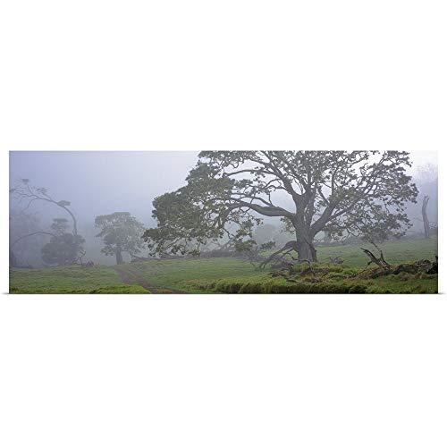 GREATBIGCANVAS Poster Print Entitled Koa Trees on a Landscape, Mauna Kea, Mana Road, Big Island, Hawaii by 60