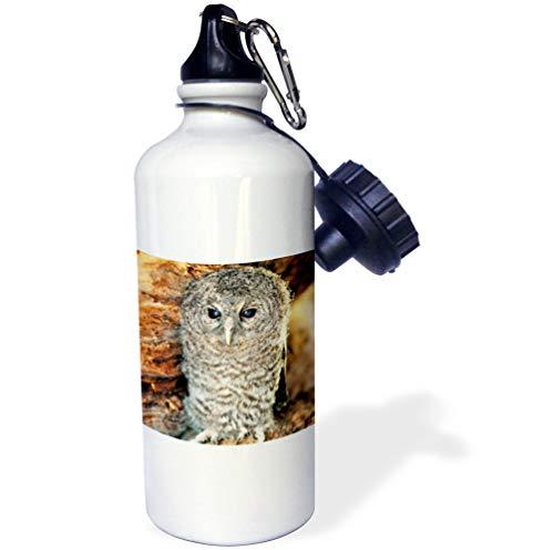 - 3dRose Kike Calvo Animals - Tawny Owl, Strix aluco One month young owl Aragon Spain - 21 oz Sports Water Bottle (wb_9903_1)