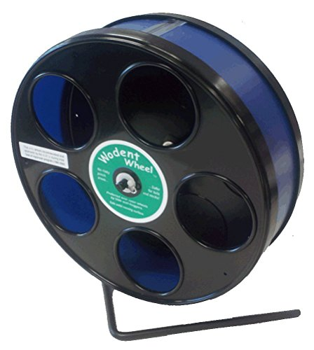Wodent Wheel 8 Inch, Black with Blue Track 41ejw6abKBL