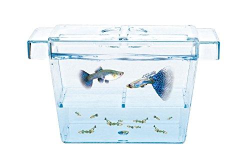 Fish Breeder - 6