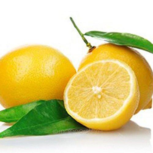 Tookie 10Pcs Lemon Seeds, Perennial Organic Fruit Tree Seeds Courtyard Bonsai Potted Plants