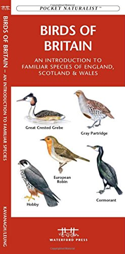Birds of Britain: A Folding Pocket Guide to Familiar Species of England, Scotland & Wales (Pocket Naturalist Guide Series)