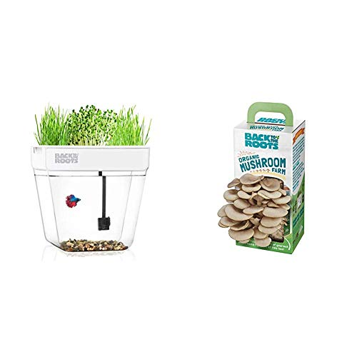 Back to the Roots Water Garden Betta Fish Tank + Organic Mushroom Growing Kit (Ready To Grow Magic Mushroom Kits Usa)