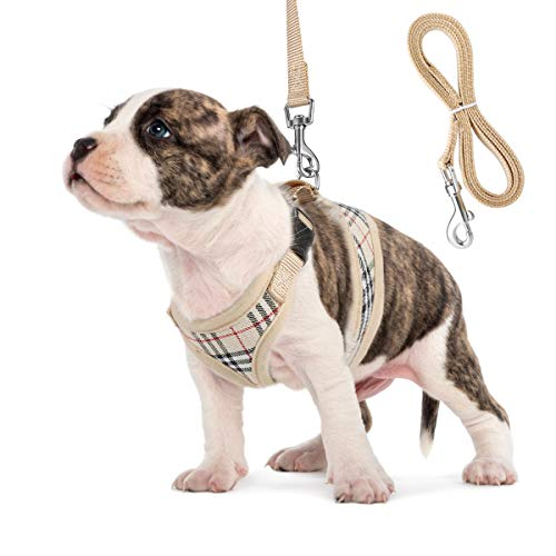 Small Dog Harness and Leash Set, Adjust Mesh Dog Harness for Small Dogs/Chihuahua, Lightweight Mesh Cat Harness,Padded Mesh Material for Breathability and Secure Fit (S) (Designer Dog Collar And Leash)