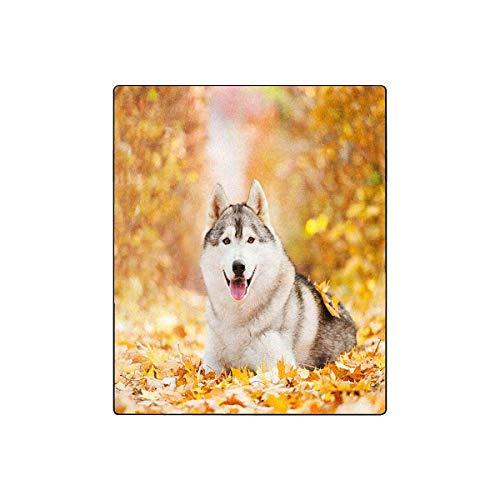 Amazon Com Interestprint Siberian Husky Lying In The Yellow Leaves