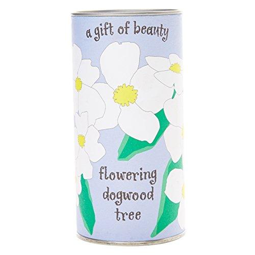 Flowering Dogwood   Tree Seed Grow Kit   The Jonsteen Company