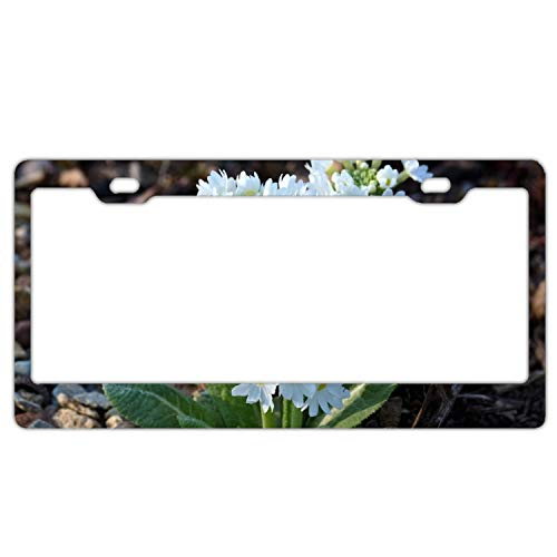 Verna Christopher Laser-Cut Chrome License Plate Frame Primrose Soil Snow-White Border Frames 12 X 6