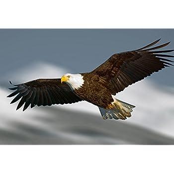 Amazon Com Bald Eagle Flying Art Print Poster Wall Decor Home