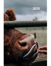 2020: Highland Cow Elegant Planner Calendar Organizer Daily Weekly Monthly Student for Notes on Honeymoon in Scotland