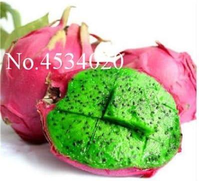G/én/érique frais 100pcs graines de fruits Pitaya pour la plantation rose