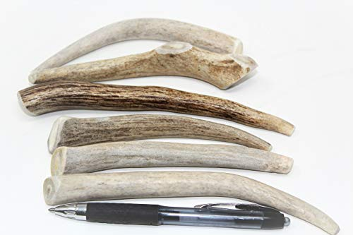 "Small Antler Dog Chews 6-Pack- 4""-7"" Gourmet Natural Dog Treats from Texas"