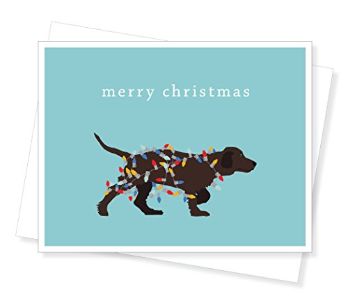 Lights Boxed Holiday Cards (Apartment 2 Cards Holiday Dog Lights Boxed Christmas Cards)