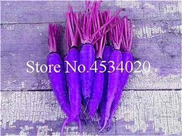 Bloom Green Co. 100 pzas Bonsai de zanahoria, flores de frutas y ...