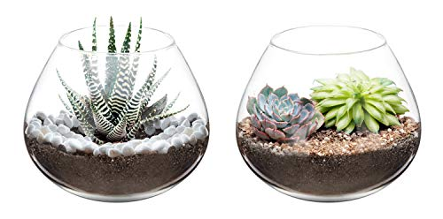 Mkono Air Plant Terrarium Clear Glass Planter Tabletop Display Vase Pot Indoor Decor for Succulent, Cactus, Candle, 5-Inch, Set of 2