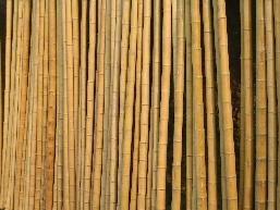 50 Bambusstangen 2 3cm 3m Bambusrohr Bambusrohre Amazon De