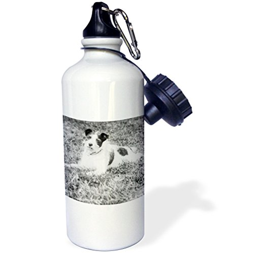 3dRose Scenes from the Past Magic Lantern - Vintage Terrier Called Terry Jack Russell Terrier Puppy Mix Circa 1910 - 21 oz Sports Water Bottle (wb_246046_1) (Puppy Terrier Mix)