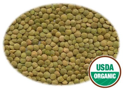 20 LBS Organic Green Lentil Beans by Got Sprouts?