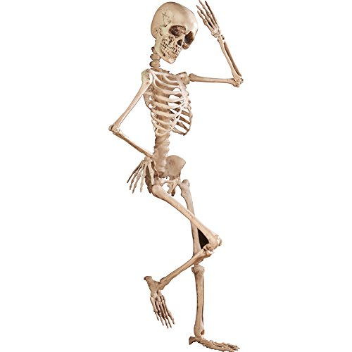Collections Etc Halloween Skeleton Décor - 4-Foot Tall Posable Realistic Halloween Decoration for Indoor or Outdoor Use