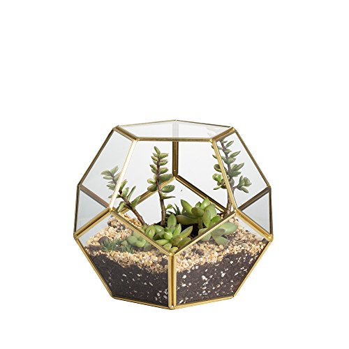Brass Glass Pentagon Regular Dodecahedron Geometric Terrarium Container Desktop Planter for Succulent Fern Moss Air Plants Holder Miniature Outdoor Fairy Garden Gift (Brass Terrarium)