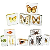 Excellerations Acrylic Specimens Collection - Set of 12 (Item # ACSET1)