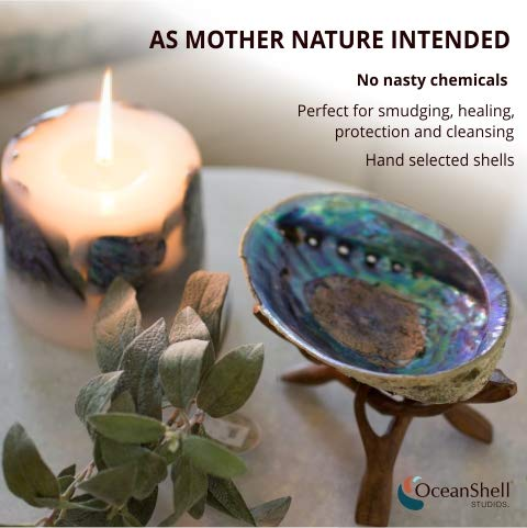 Ocean Shell Studios 6.5''+ Supreme Plus Natural Abalone (Pāua) Shell with Wooden Stand, for Smudging, Cleansing Home, Meditation, Shell Crafts,Incense Holder, Home Décor, 100% Natural, Sustainable. by Ocean Shell Studios (Image #2)