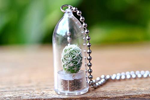 Snowball Cactus Plant Necklace. Cactus Terrarium Gift