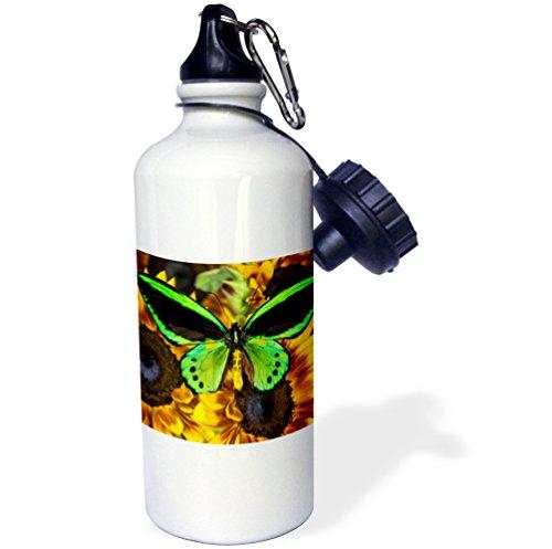 Danita Delimont - Butterflies - Common Green Birdwing or the Priams Birdwing, Male - 21 oz Sports Water Bottle (wb_228388_1)