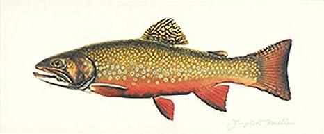 Brook Trout Joseph Tomelleri Fly Fishing Litho Art Print Poster 20x11