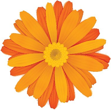 Beautiful Vibrant Spring Gerber Daisy Flower Icon Vinyl Decal Sticker (4