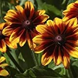 Outsidepride Rudbeckia Hirta Autumn Forest - 5000 Seeds